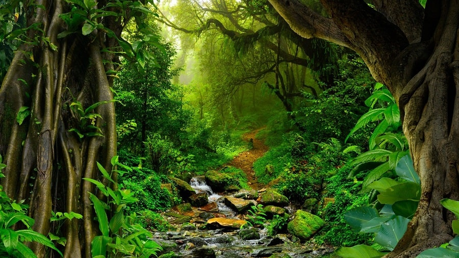 natures-pharmacy-a-journey-through-amazon-jungles