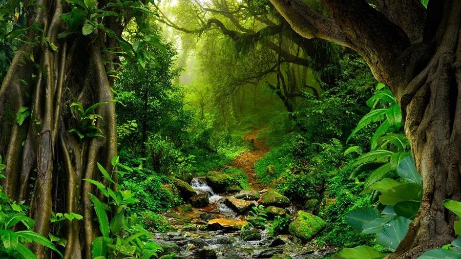 natures-pharmacy-a-journey-through-amazon-jungles